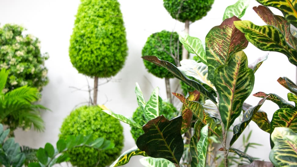 Variety of greenery and topiary against a white wall